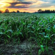 Global economic and environmental benefits of GM crops continue to rise