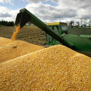 Does GMO corn increase crop yields? 21 years of data confirm it does—and provides substantial health benefits