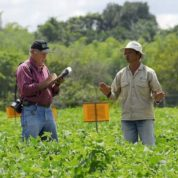 15 surprising GMO and gene-edited crop advances underway in South and Central America