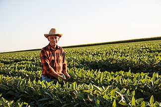 SURVEY REVEALS 90% OF RURAL PRODUCERS IN BRAZIL RECOGNIZE IMPORTANCE OF BIOTECHNOLOGY
